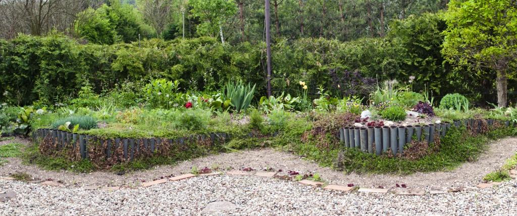 Byliny | Rośliny wieloletnie
